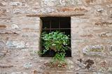 Window with plant.