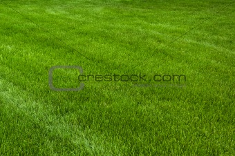 Neatly cut grass