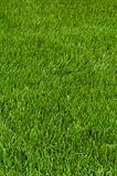 Neatly cut grass