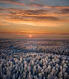 snow-covered forest of sunset