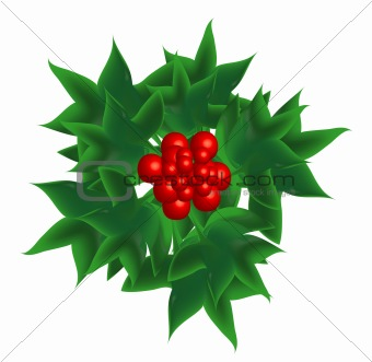 Sprig of European holly, object isolated