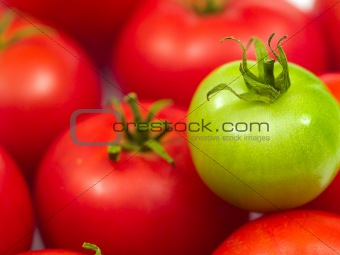 A Background of Red Ripe Tomatoes and One Green Tomato