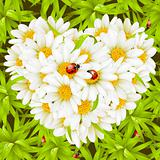 Vector seamless background: camomiles and ladybugs
