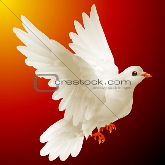 Vector white dove