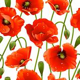Seamless background: poppy