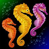 Vector Seahorses