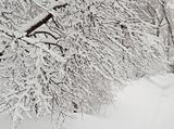 Bare snowbound branch