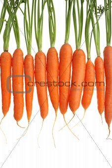carrots vertical upper