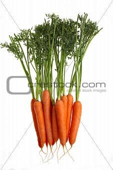 carrots vertical