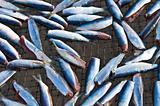 Dry fish