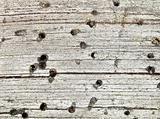 Background - rotten wood