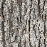 Seamless texture - bark