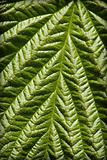Surface of green leaf - natural background