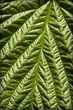 Surface of green leaf - natural background