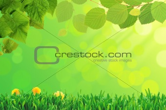 green grass and flower, summer day background