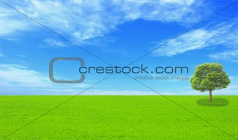beautiful summer landscape with blue sky, green grass and tree