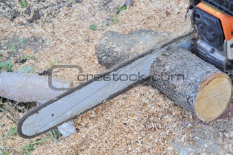 chainsaw blade cutting the log of wood