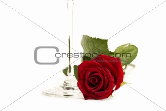 wet red rose near the bottom of a champagne glass