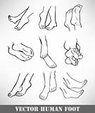 Set of human foot. Vector