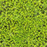 Seamless texture - marsh moss