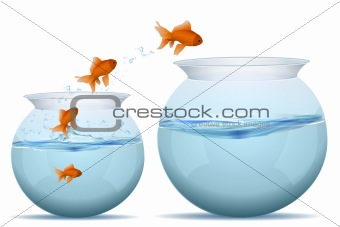 fishes jumping from water