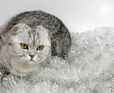 Cat with tinsel