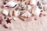 seashells in sand with text