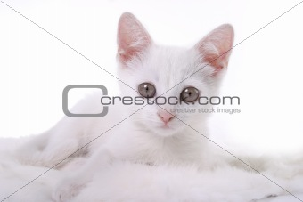 kitten on white fur