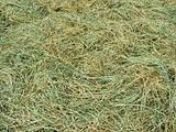 dry hay