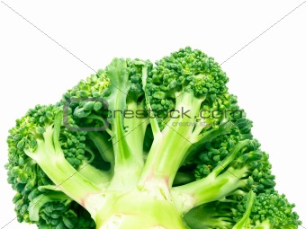 Broccoli the bottom view