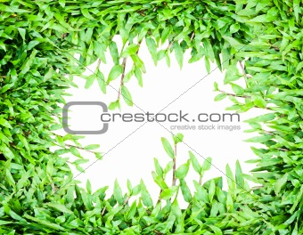 Green grass hole isolate