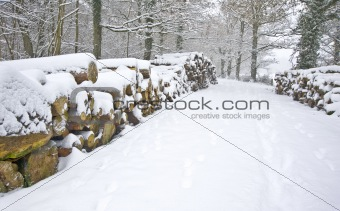 Snow covered timber stack in forest