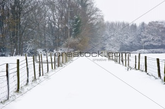 Beautiful path through snow covered forest floor