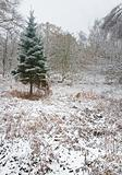 Lone colorful Christams tree in snow covered forest