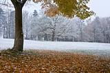Autumn Fall color tree and leaves changing to snow and winter in background
