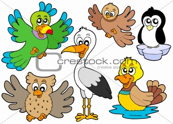 Cute birds collection 2