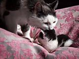 Mother Cat takes care of her baby
