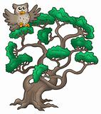 Big pine tree with cartoon owl