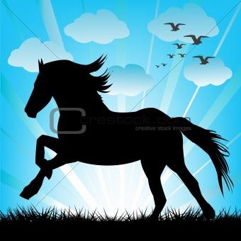 Black horse silhouette