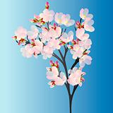 Cherry branch on blue background