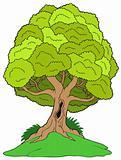 Leafy tree on hill