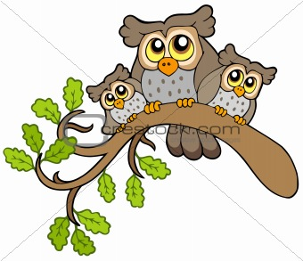 Three cute owls on branch