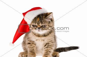 kitten santa
