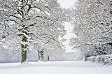 Winter forest snow scene