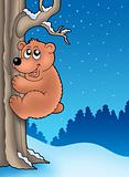 Cute bear climbing tree