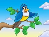 Cute blue bird on branch