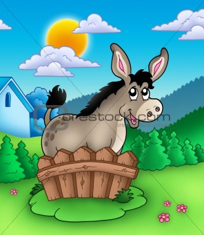 Cute donkey behind fence
