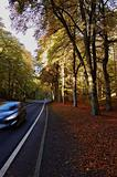 driving under fall with leaves and top