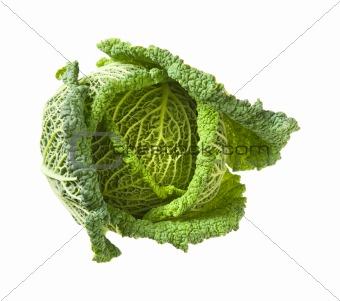 Savoy cabbage head isolated on white background;