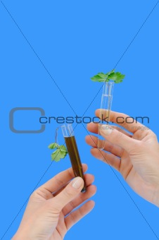 Clean and dirty water samples with fresh and wilted leaves